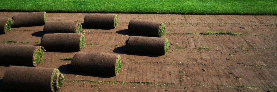 En iyi tohumlardan kendi üretimimiz rulo çimler.