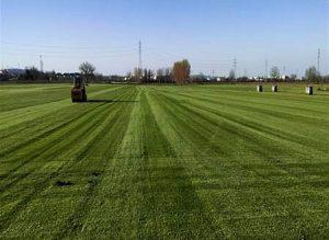 Bornova hazır rulo çim